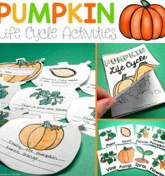 pumpkin life cycle activities [ 1024 x 1024 Pixel ]
