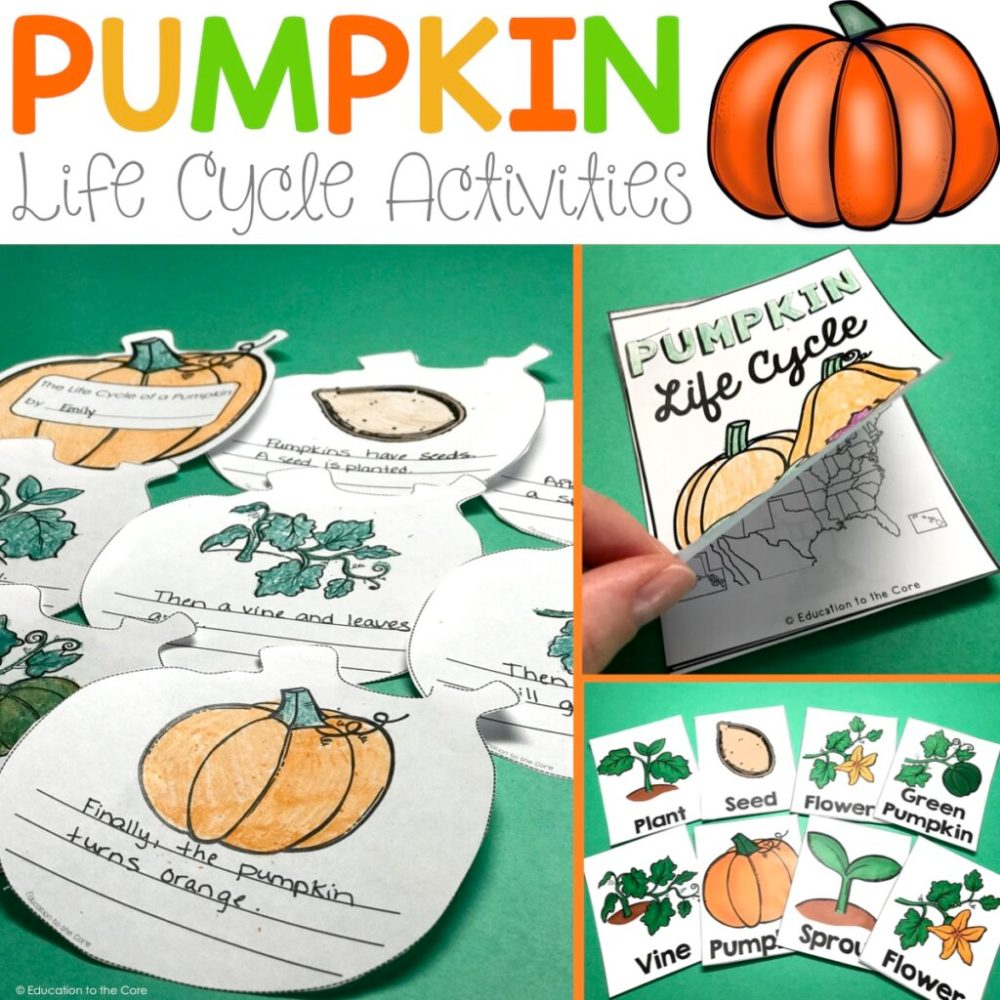 medium resolution of pumpkin life cycle activities