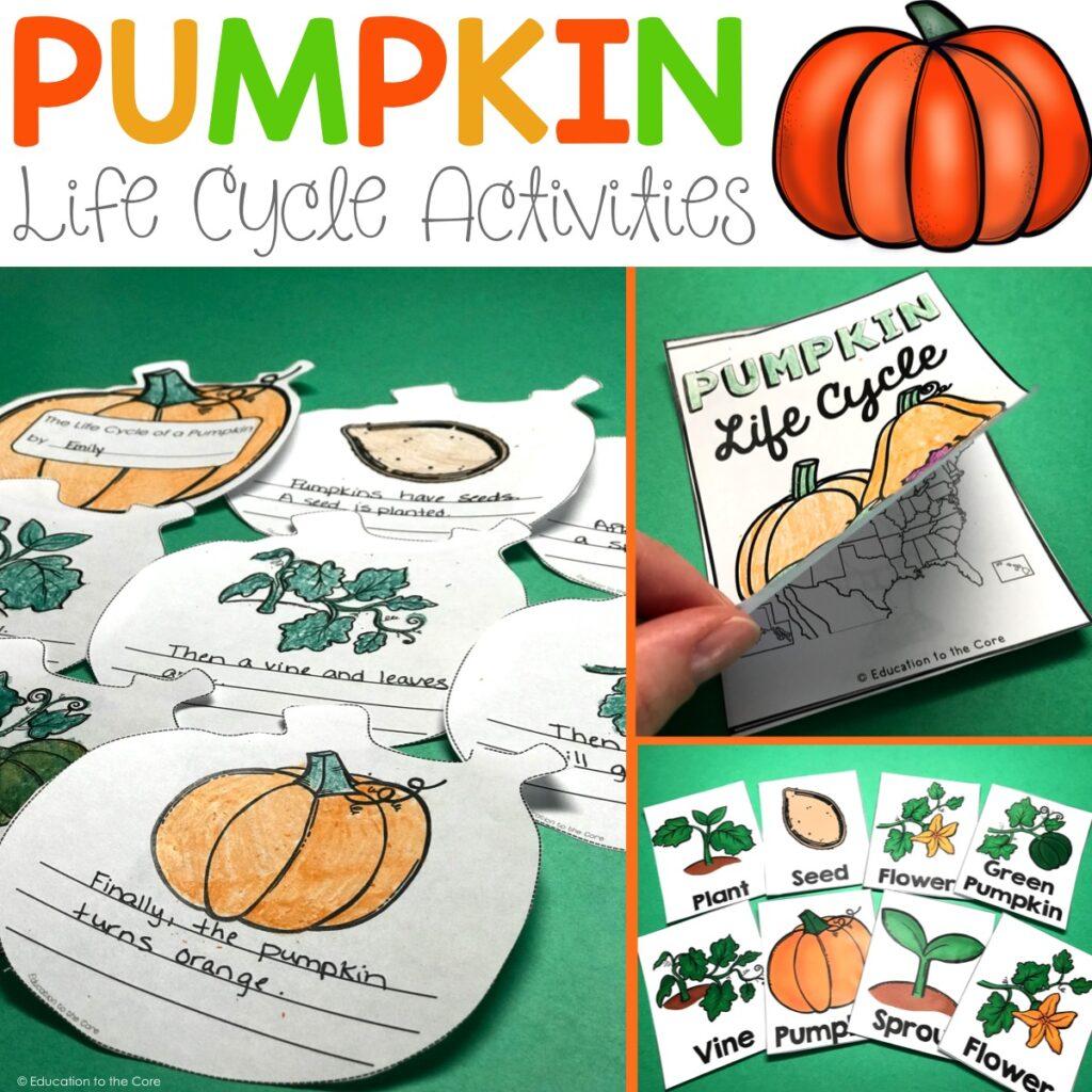 hight resolution of pumpkin life cycle activities
