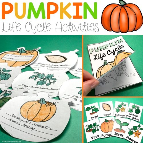 small resolution of pumpkin life cycle activities
