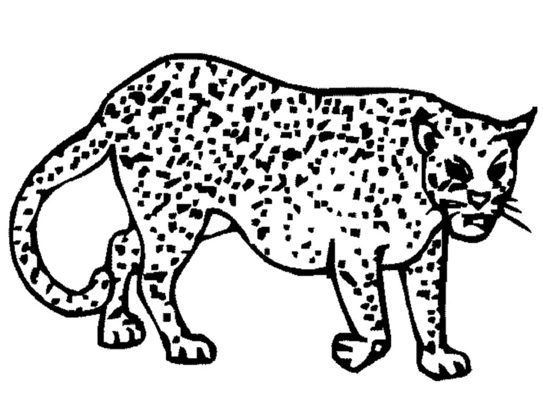 Creative People Use Cheetah Coloring Pages