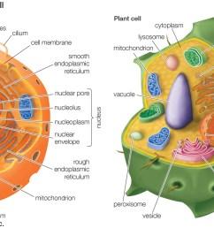 plant cell v animal cell venn diagram [ 1600 x 775 Pixel ]