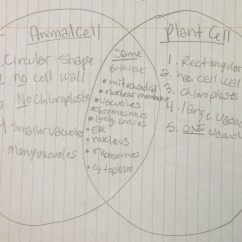Plant Cell Animal Venn Diagram Pontiac Solstice Radio Wiring And