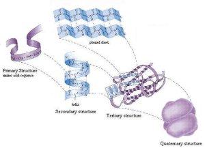 Biochemistry: Chemical Constituents of Cells | EduForums