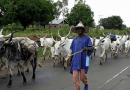 CAN, JNI clash over FG's radio station for herdsmen