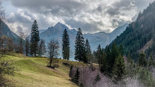 Starting a dream school in Austria
