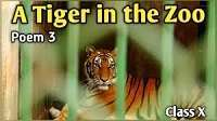 A Tiger in the Zoo- Multiple Choice Questions