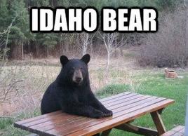 picnic table bear