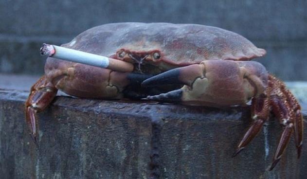 crustaceans are selfish