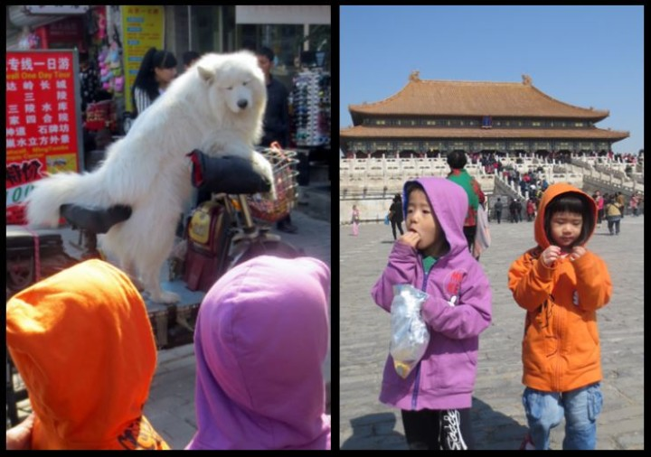Dog driving a motocyle! Forbidden City! Which one is better, Gemini?