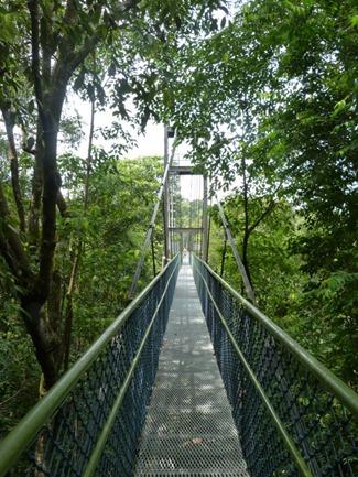 treetop bridge