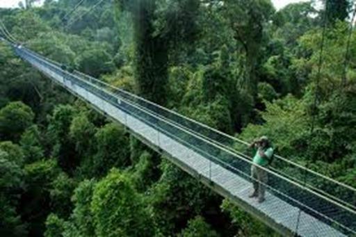 treetop walk