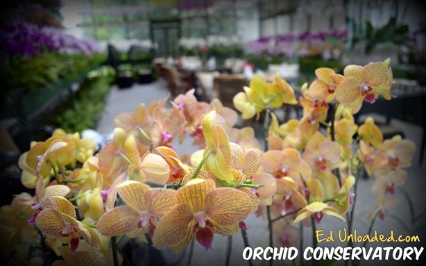 orchid conservatory