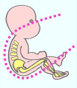 Position physiologique
