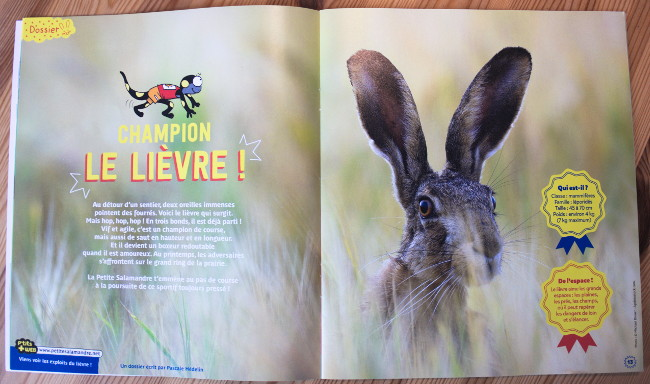 Magazine nature - La petite salamandre - Dossier