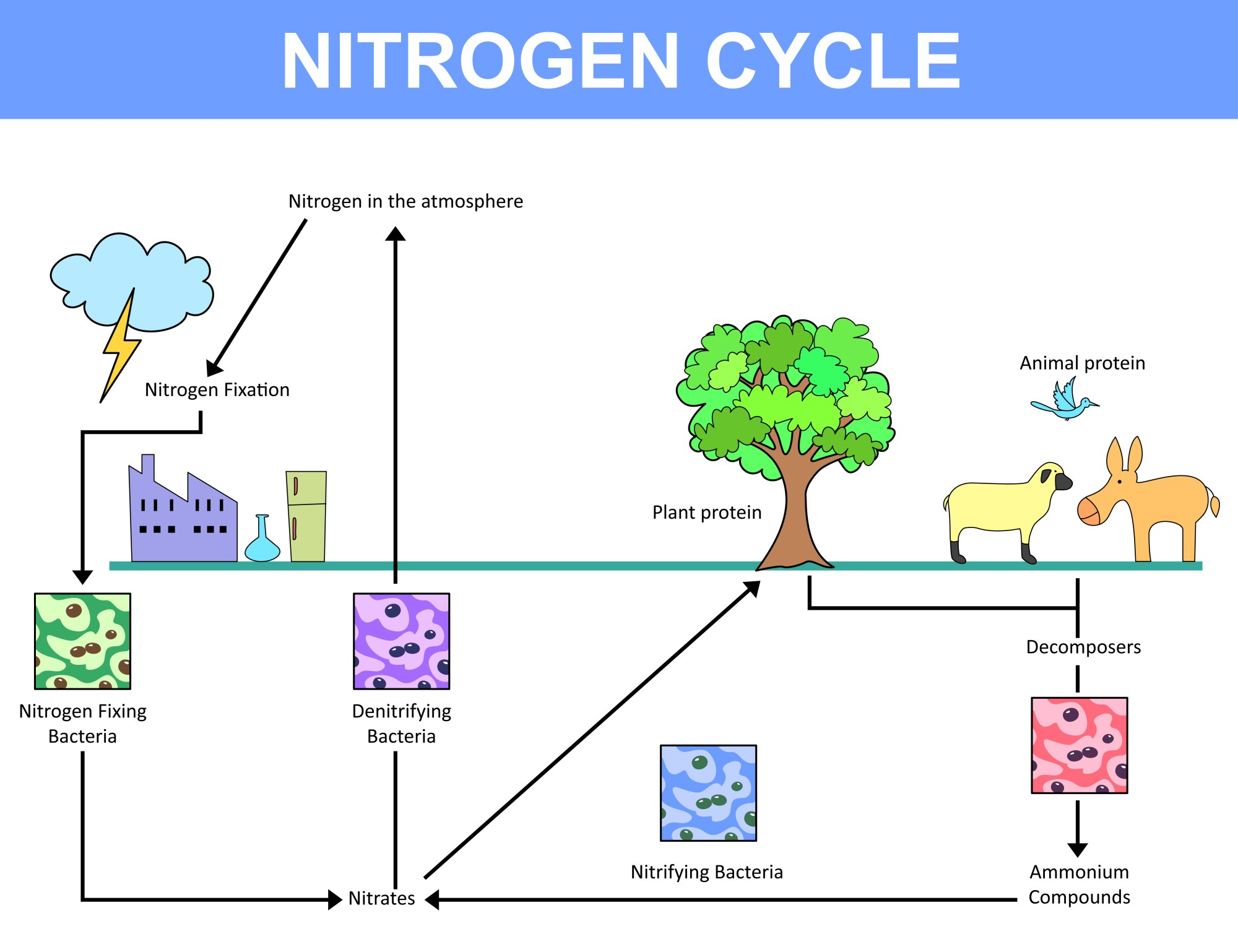 hight resolution of nitrogen cycle explained