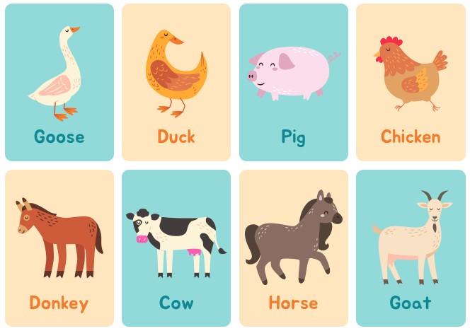 Farm Animal Flash Card