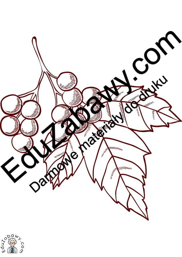 Kolorowanki: Dary jesieni Jesień Kolorowanki Kolorowanki (Jesień)
