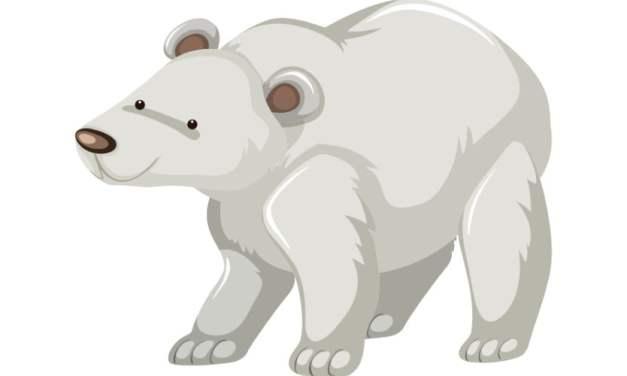 Dekoracje: Niedźwiedź Polarny (10 szablonów)