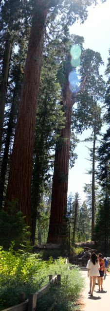Big Trees-Sequoia National Forest