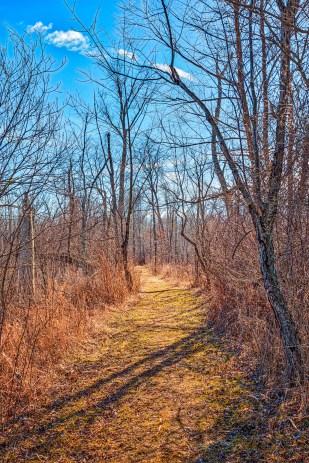 Entering Great Marsh Trail