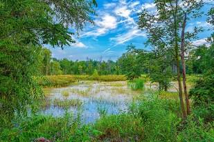 Marsh in Late Summer