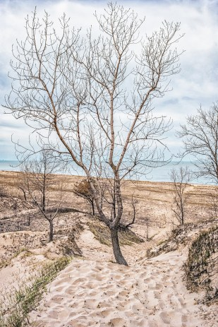 Tree in Trail