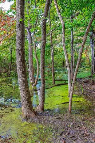 Wetland Woods