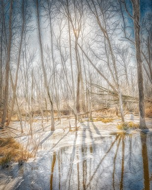 Wintry Wetlands