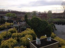 Edward's Garden Center has many topiaries for sale.