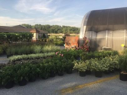 Summer Plants at Edward's Garden Center
