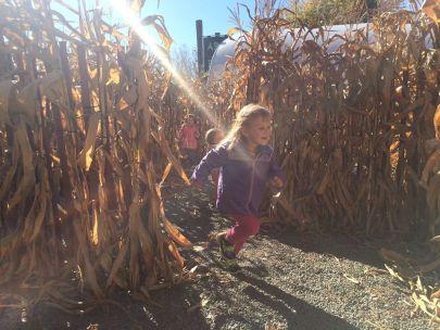 Edward's Garden Center Corn Maze