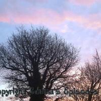 Tree Style!!