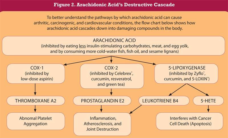 cascata infiammatoria dell'Acido Arachidonico