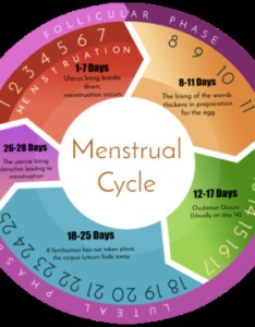 Menstrual cycle chart by anigan inc displayed on https also internet scientific publications rh ispub