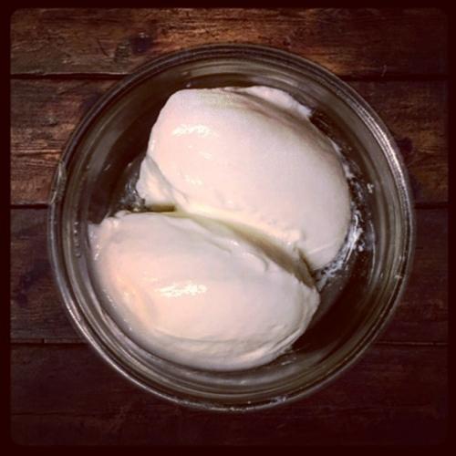 Yoghurt (SC &SV)