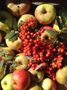 lijsterbessen en appels