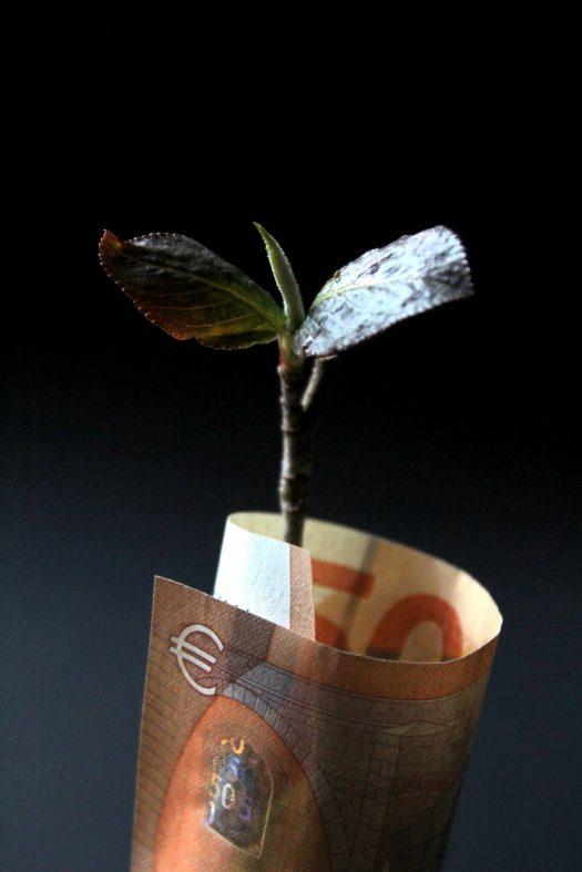 Geldboompje: geld blijft voor mij de meest logische keuze