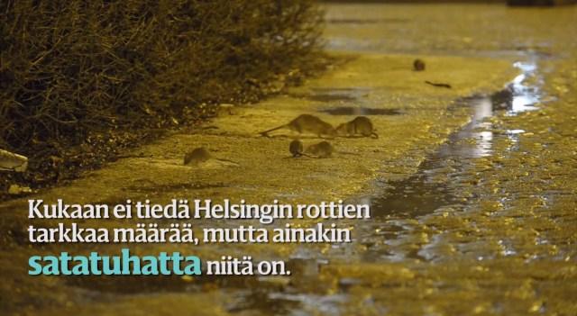 Helsingi kesklinna on vallutanud rotid