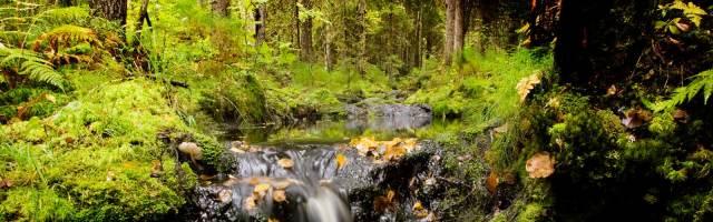 Soomes ostetakse looduse säilitamiseks maad kokku
