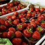 Soomet võib tabada toidupuudus – tahetakse hakata lennukitega sisse tooma Ukraina põllutöölisi