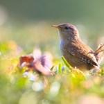 Euroopa maapiirkondades sureb välja ka loodus – putukamürk hävitab linnud