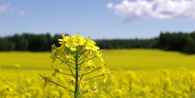 Euroopa Liidus keelatatakse alates aasta lõpust mesilastele ohtlikud taimekaitsevahendid