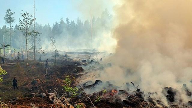 Teadlased: metsapõlengud on ohtlikud inimesele, aga loodusele teevad head