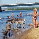 TÄHELEPANU: Kuumus saabub Soome, kuumahoiatus antud 11 maakonnas