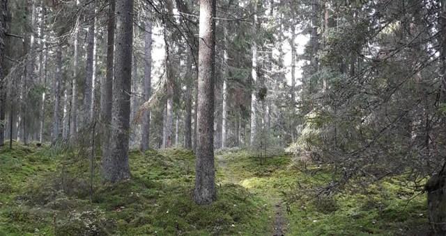 Turu ligidalt metsast leiti seal 1990ndatest aastatest elanud mees – arvas, et ei leia omale võlgade tõttu kunagi elamist