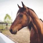 Soome ratsasportlane hukkus Lõuna-Aafrikas