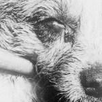 Hulkuvad koerad närisid Taimaal 5-aastase soome poisi kõri, kahtlustatakse marutaudi