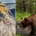 Kohutav video: Vene mees oli kuu aega karukoopas, karu murdis mehel selja ja hoidis teda hilisemaks (NB! Nõrganärvilistele mittesoovitav vaatamine!)