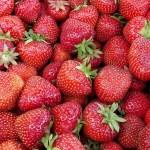 Helsingisse tuuakse Eesti maasikaid – hind 5€ kilo